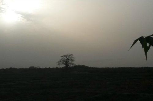 Article : Sénégal : comment j'ai désacralisé Dakar ?